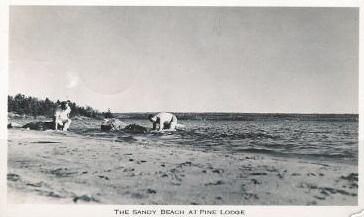 La plage / The beach, Pine Lodge