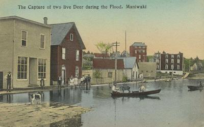 Inondation; sauvetage des chevreuils / Flood; rescuing deer