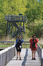 Boardwalk. (Photo - Courtesy Parc national de Plaisance)